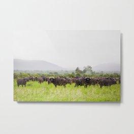 Tanzanian Water Buffalo Metal Print