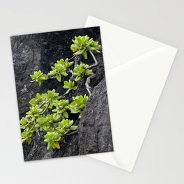 Wild Hawaiian Green Succulents Growing From Lava Rock Stationery Cards