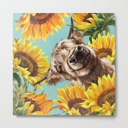 Highland Cow with Sunflowers in Blue Metal Print