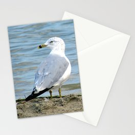 Untitled, Maumee Bay Stationery Cards