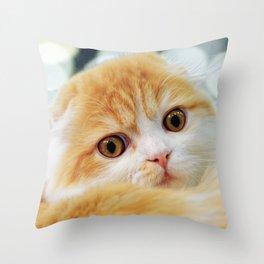 Young Scottish Fold cat Throw Pillow