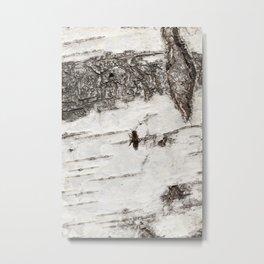 white striped birch bark Metal Print