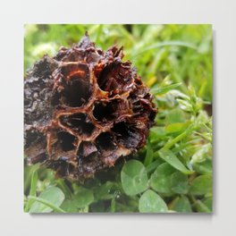 Sweet gum tree pods Metal Print