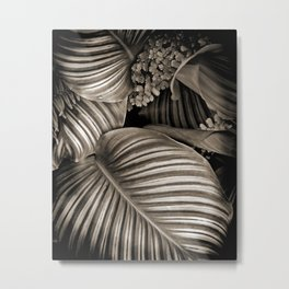 Striped Tropical Calathea Leaves Metal Print