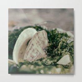 Seaweed and Shells on the Beach Nature / Coastal Photograph Metal Print