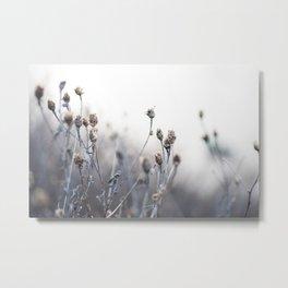 Dried Flowers in Cool Tones Metal Print