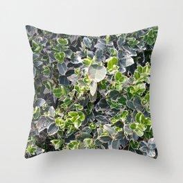 Euonymus scrub Throw Pillow