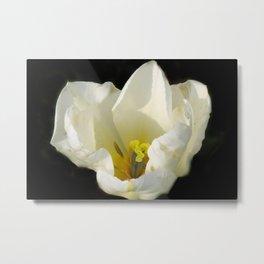 flowers of spring on black -71- Metal Print