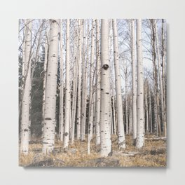 Trees of Reason - Birch Forest Metal Print