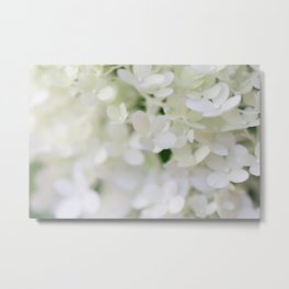 Hydrangea in Full Bloom -Flower Photography Metal Print