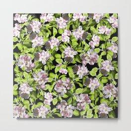 Apple Blossoms, Spring Flower, Springtime, Floral, Botanical, Pink Flowers Metal Print