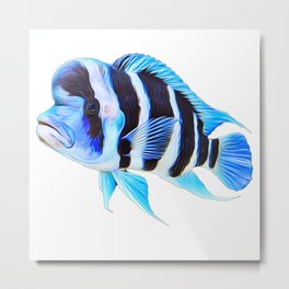 Frontosa Cichlid Aquarium Fish Metal Print