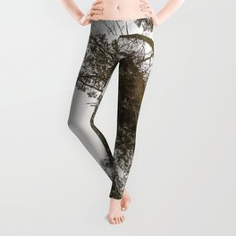 Sequoia Stretch - Nature Photography Leggings