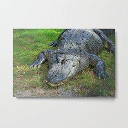Gator in Davie Metal Print