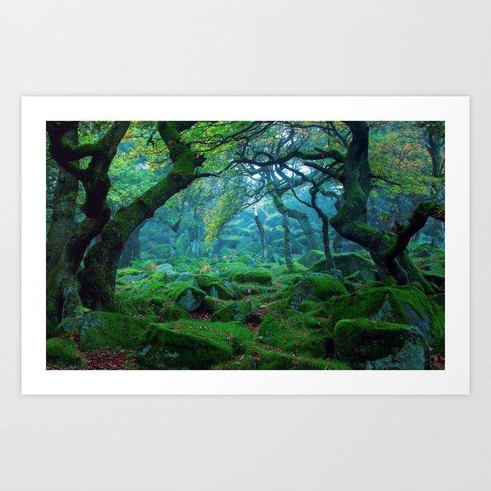 Enchanted forest mood Kunstdrucke