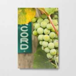 Green Concord Grapes Metal Print