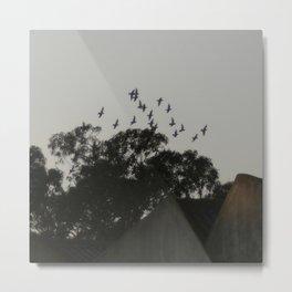 Nightfall flight Metal Print