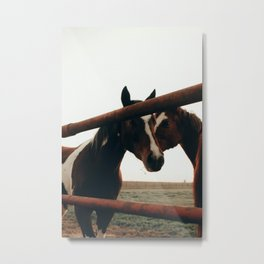 Brown Horses Metal Print