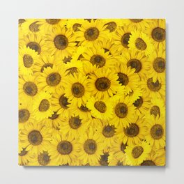 Lots of sunflowers Metal Print