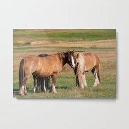 Gypsy Vanner Horses 0271 - Colorado Metal Print