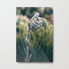 Morning In The Succulent Garden #4 Metal Print