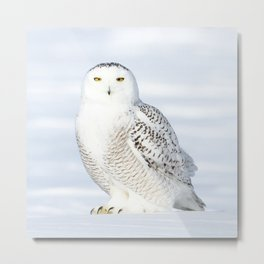 Snowy owl goddess Metal Print