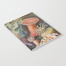 Ernst Haeckel Sea Anemones Vintage Illustration Notebook