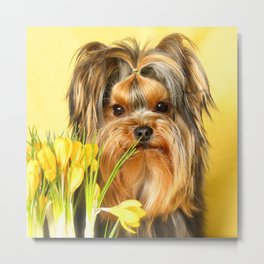 Spring Yellow Crocuses With Yorkie Puppy  Metal Print