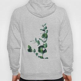 Eucalyptus branch Hoody