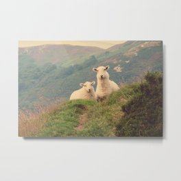 Sheep In The Wild Nature- Landscape Photography  Metal Print