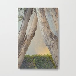 Amherst Trees 01 2020 Metal Print