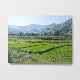 Farmland | Rice Fields Turkey European Agriculture Green Landscape Photograph Rolling Hills Mountain Metal Print