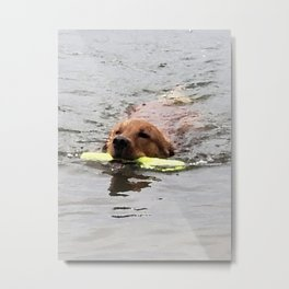 Golden Retriever Water Retrieve -  Leo Metal Print